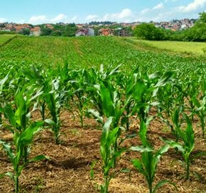 Why I must do Agric. An AFRICAN YOUTH
